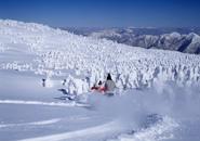 樹氷原を滑る