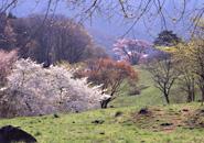 西蔵王高原 早春の萌