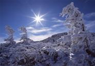 山頂駅付近の初冬季の樹氷群