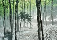 残雪のブナ林(蔵王中央高原)