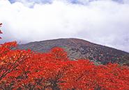 三宝荒神山。真赤にもえるサラサドウタン