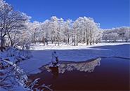 初雪の頃・ドッコ沼の水面に映す霧氷