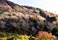 三宝荒神山北壁・ダケカンバ白銀のキラメキ
