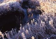 地塘のほとり 植物の葉や茎に凍てつく霧氷