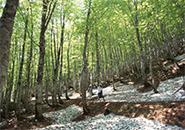 蔵王中央高原 名残雪を歩く