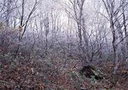 真っ白に耀く木々の梢