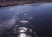 池塘に見る氷の耀きイロハ沼