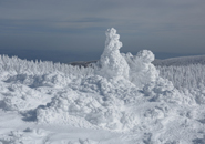1月21日地蔵尊付近の樹氷