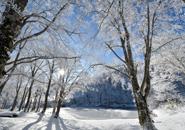 1月中旬頃のドッコ沼の霧氷