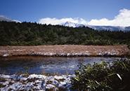 (3)初雪、冬を待つ草紅葉のイロハ沼