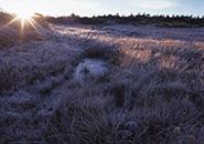 池塘の降霜 坊平高原御田の神湿原