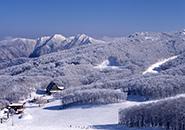 蔵王中央高原 広大なブナ林の霧氷原