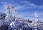 成長期の樹氷、完成期間おおよそ1ヶ月