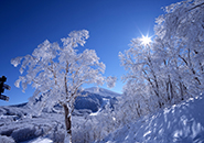 中央高原 ブナの森の霧氷原