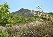 高く聳える三宝荒神山(1,447m)残雪拳雪