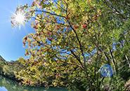 (1)初秋のドッコ沼